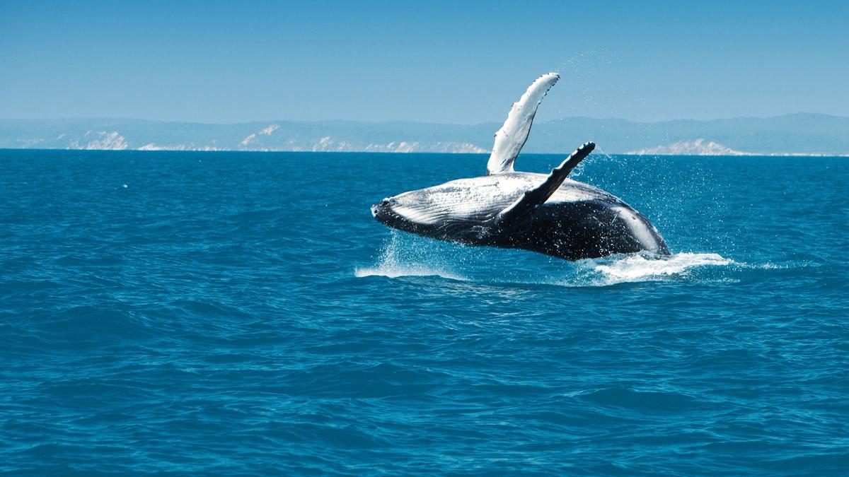 wieloryb rynku